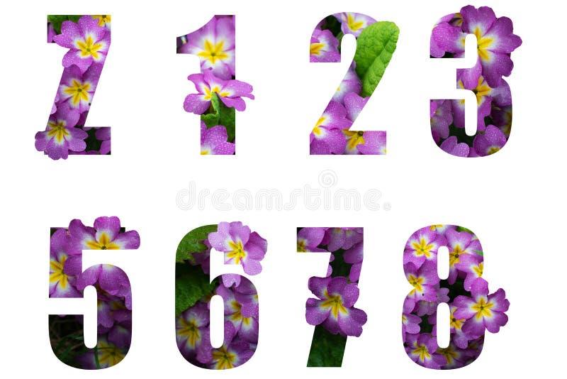 Fiori 6 Lettere.Foto Stock E Immagini A Tema Numeri 6 Dei Fiori Scarica 294 Foto