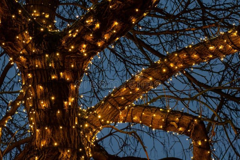 Belle luci di Natale intorno ai rami di albero contro i precedenti blu-chiaro del cielo nella notte fotografia stock