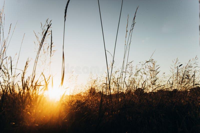 Belle lumière du soleil le soir en champ et ciel d'été suns photographie stock