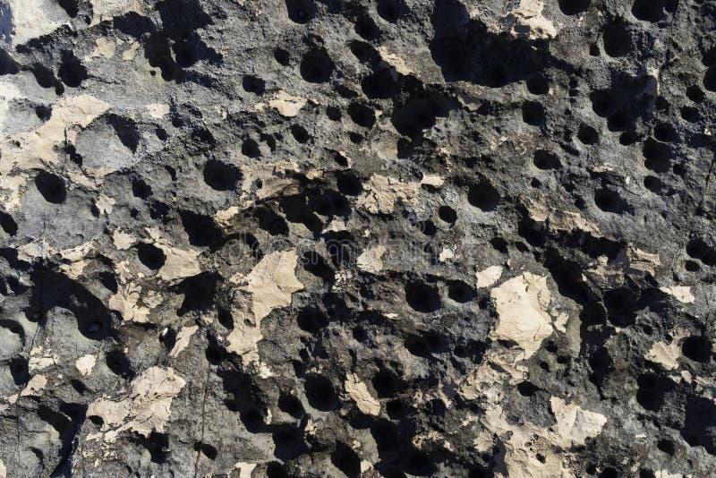Belle macro photo des textures, des modèles et des détails de la roche, de la pierre et du récif autour de la Mer Adriatique photos stock