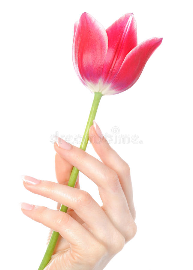 Belle main avec la manucure française parfaite photographie stock