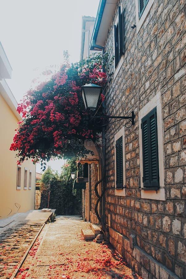 Belle maison avec l'arbre fleurissant rose dans Herceg-Novi photographie stock libre de droits