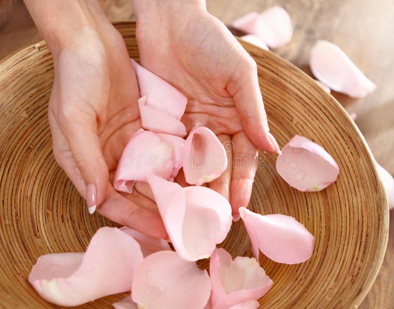 Belle mani della donna e dei petali di rosa immagine stock