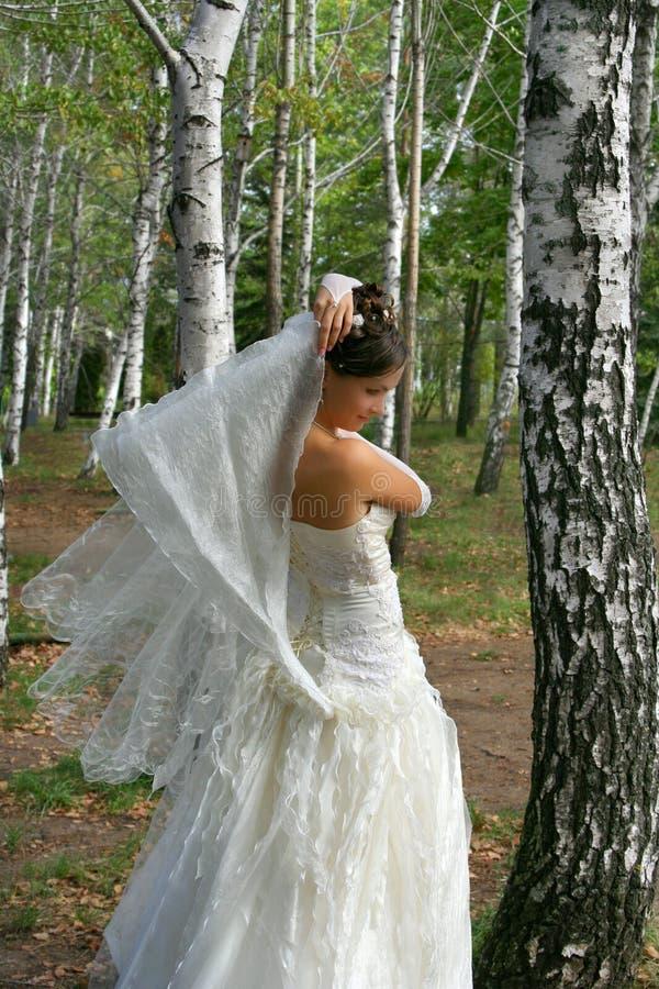 Belle mariée dans la plantation de bouleau photos stock