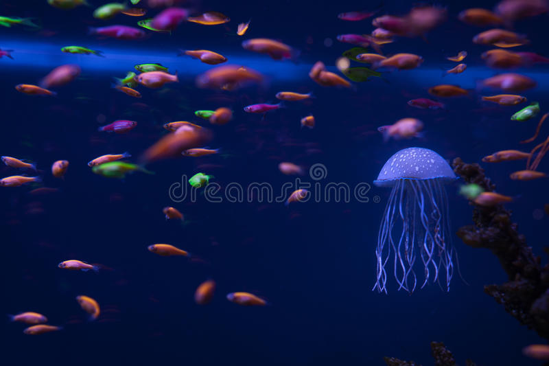 Belle meduse subacquee fotografia stock