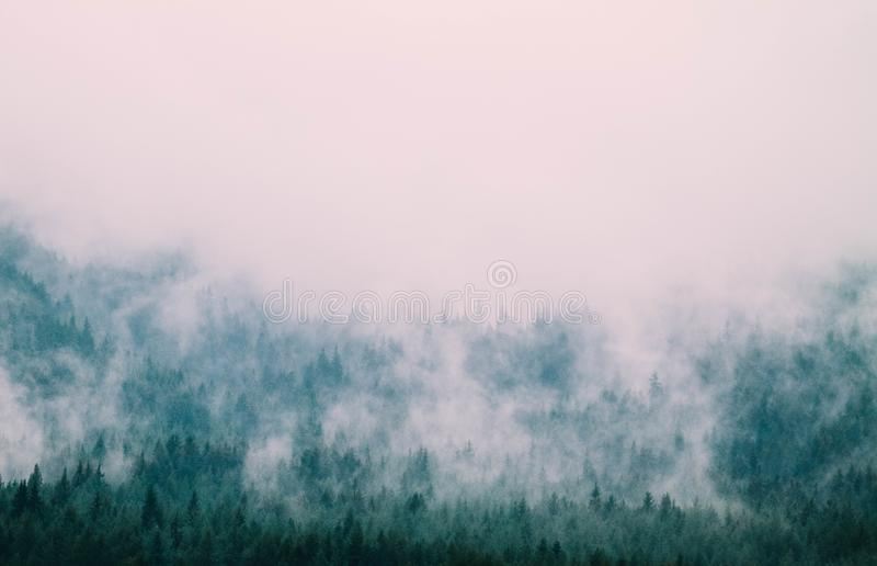 Belle montagne mistiche nebbiose Nuvole della nebbia al pino mio immagini stock libere da diritti