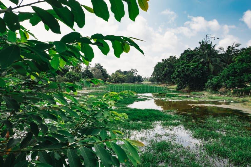 Belle natura, palude e riflessione a luce del giorno con cielo blu nuvoloso fotografie stock