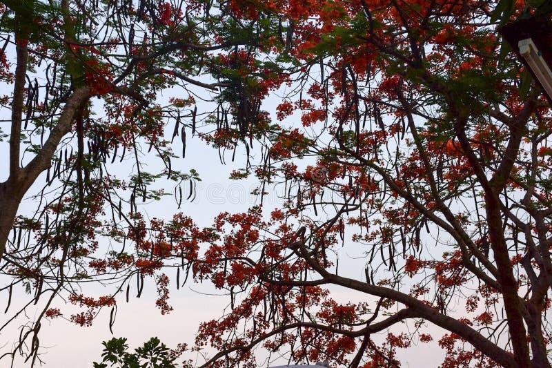 Belle nature avec l'arbre image stock