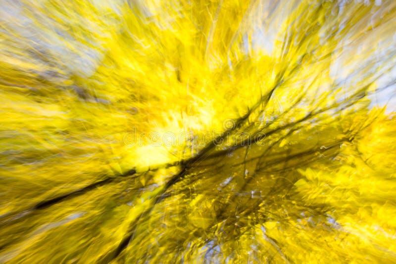 Belle nature d'automne de bokeh dans le mouvement photographie stock libre de droits