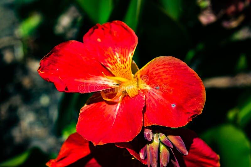 Belle nature de nature images stock