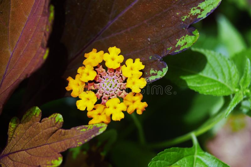 Belle nature de nature photos libres de droits