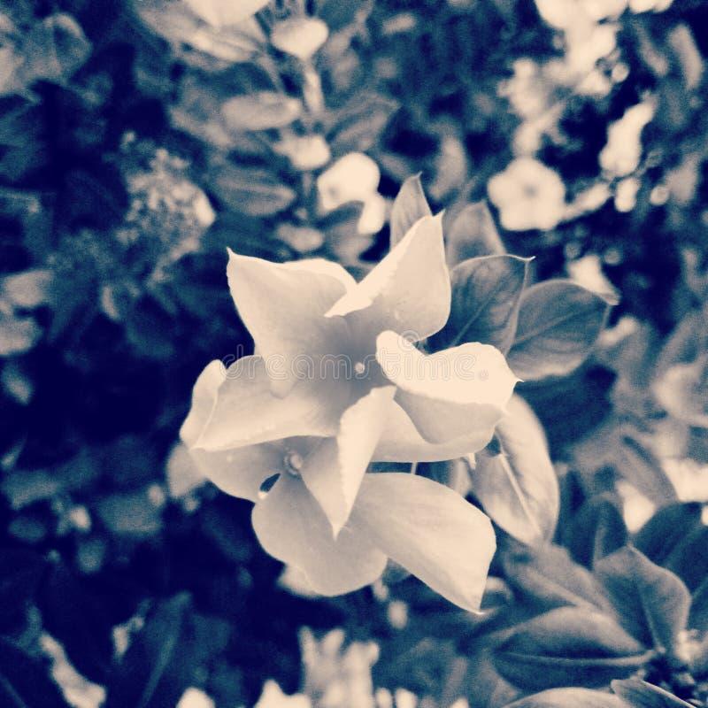 Belle nature de fleurs photos libres de droits