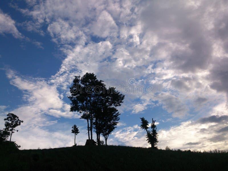 Belle nuvole la sera degli alberi di inverno fotografia stock
