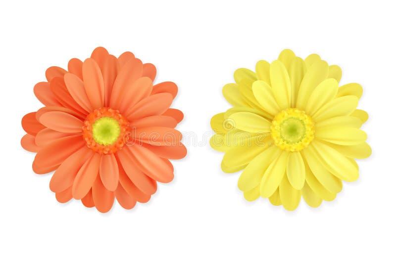 Belle orange réaliste et fleurs jaunes d'isolement sur le fond blanc Image de vecteur illustration libre de droits
