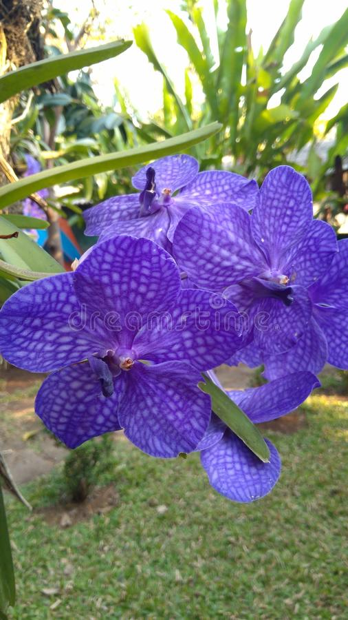 Belle orchidée photos stock