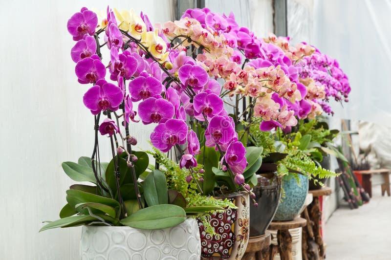 Belle orchidée image libre de droits