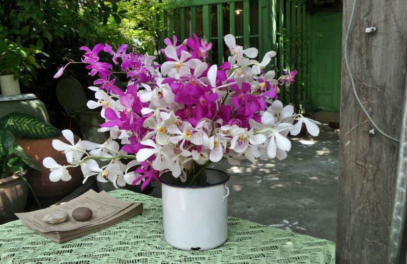 Belle orchidée colorée dans le vase blanc sur la table verte photo libre de droits