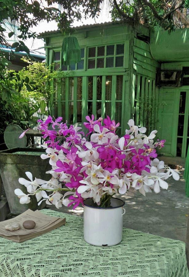 Belle orchidée colorée dans le vase blanc sur la table verte photos libres de droits