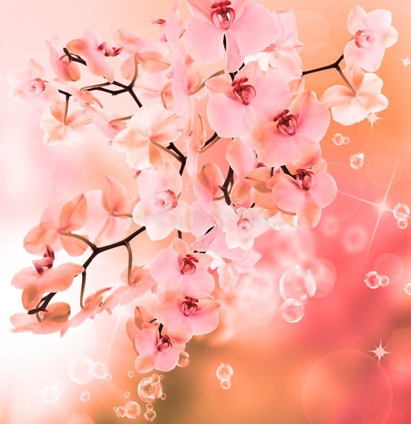belle orchidée de floraison de fleur de japanesse illustration libre de droits