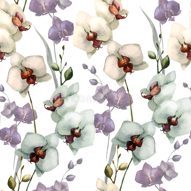 Belle orchidée flower5 illustration stock