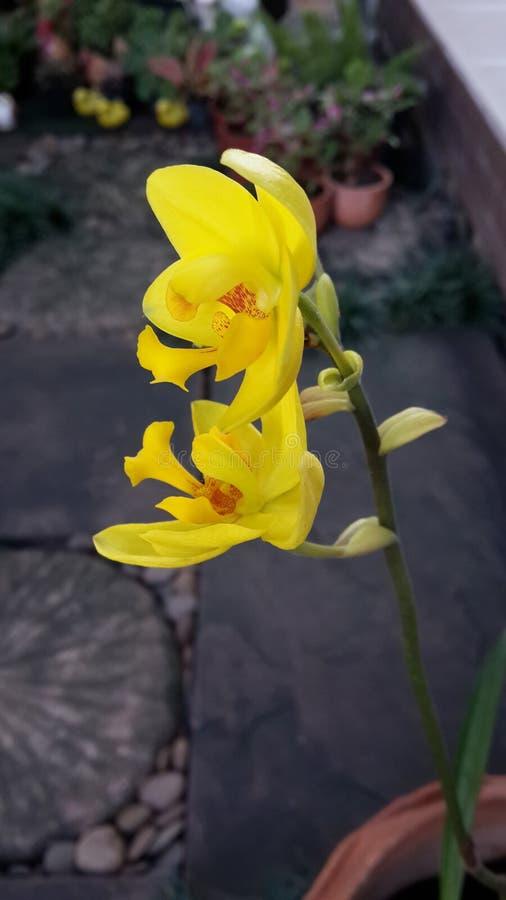 Belle orchidée moulue image stock