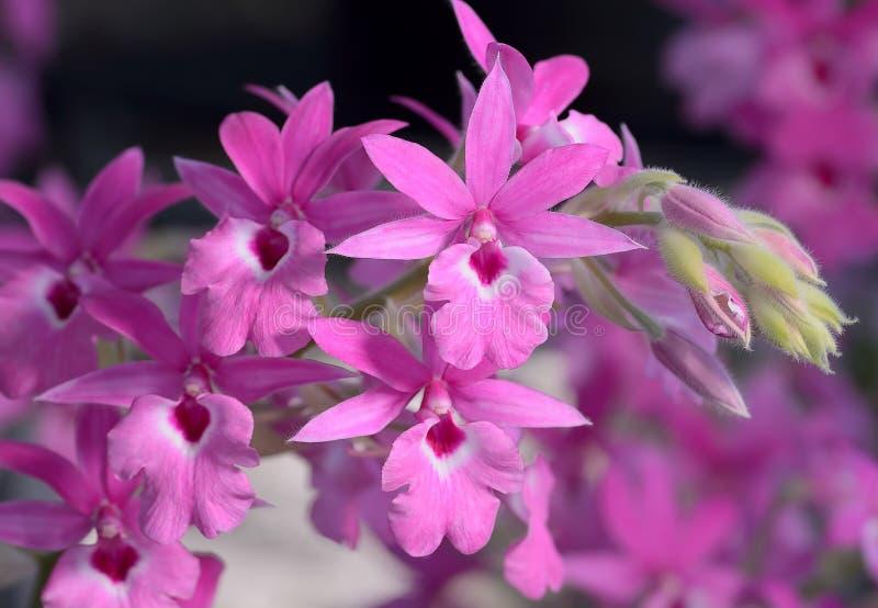 Belle orchidée rose photos stock