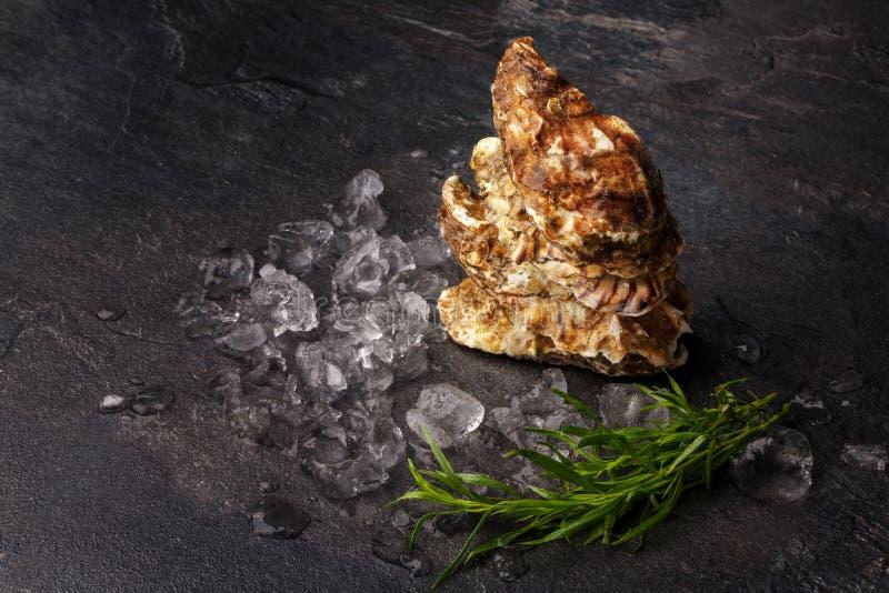 Belle ostriche fresche su un fondo nero Molluschi con i cubetti di ghiaccio ed il dragoncello Alimento squisito Copi lo spazio immagini stock