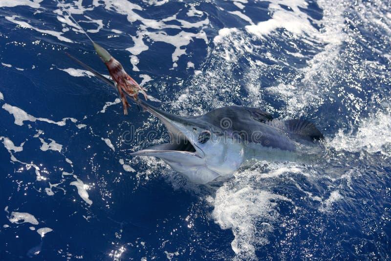 Belle pêche de sport réelle d'aiguille de mer de marlin blanc photographie stock libre de droits