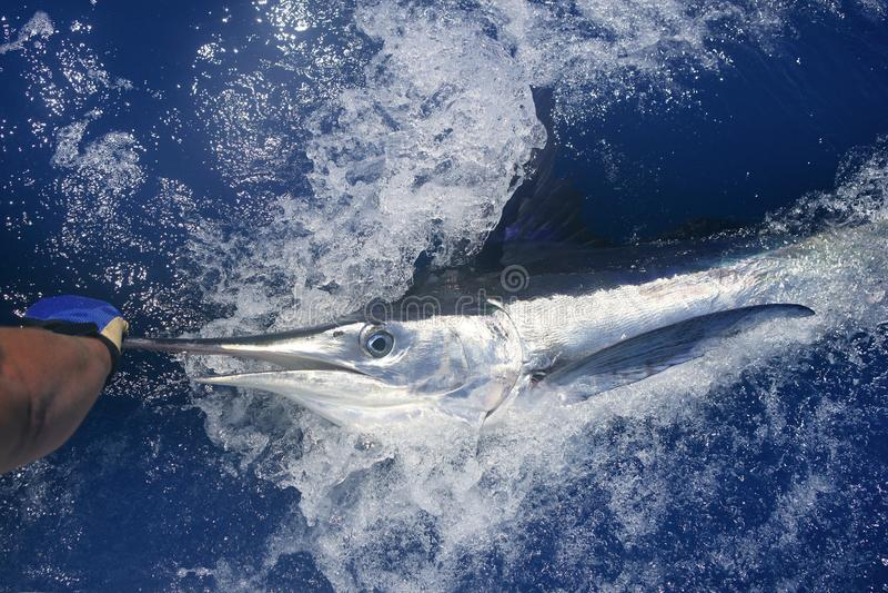 Belle pêche de sport réelle d'aiguille de mer de marlin blanc photographie stock