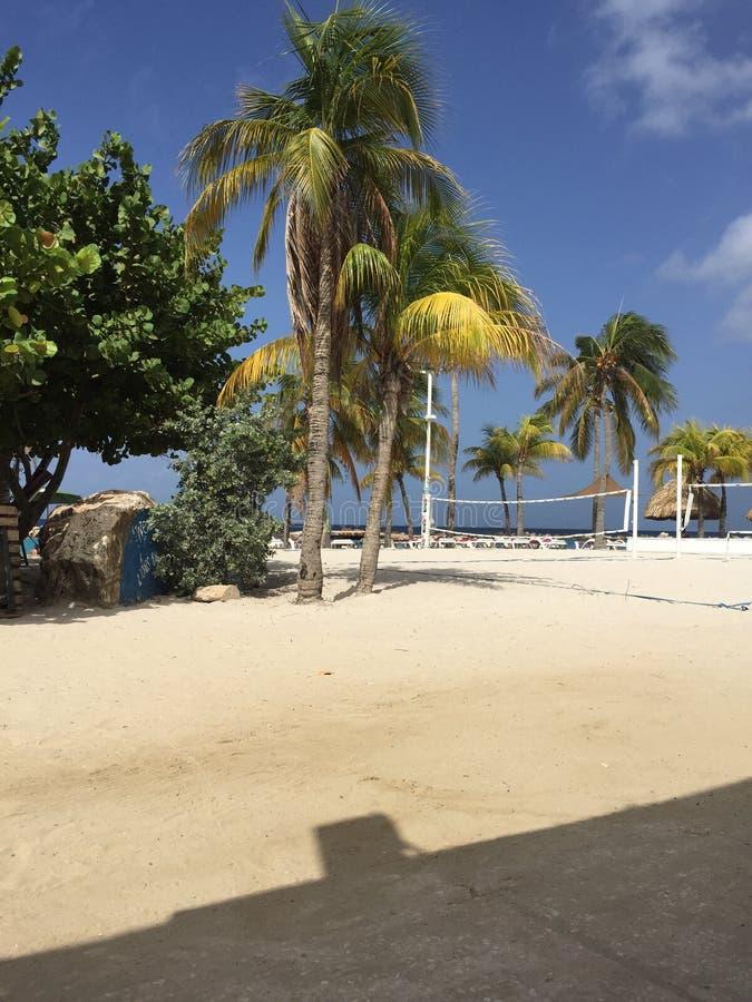 Belle palme alla spiaggia di mambo, Curacao immagine stock