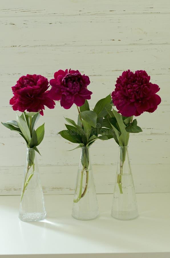 Belle peonie rosa della molla in vasi in tavola di legno bianca fotografia stock libera da diritti