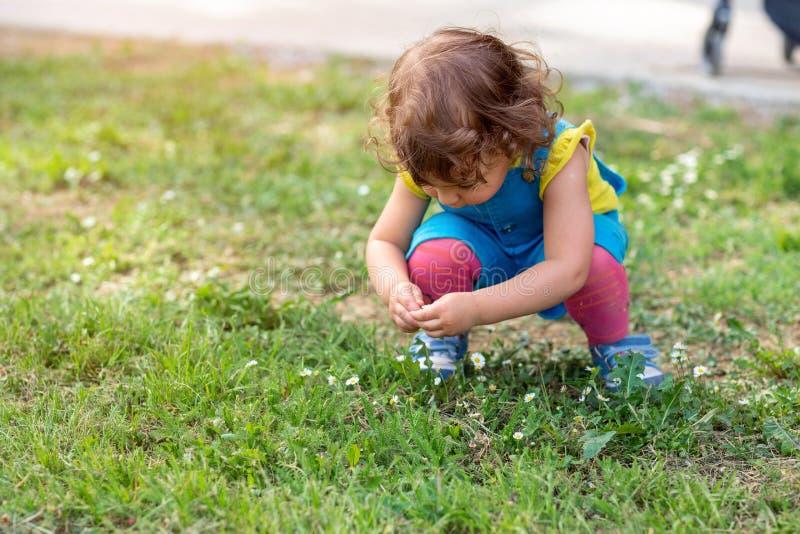Belle petite fille sélectionnant des fleurs en parc photo stock