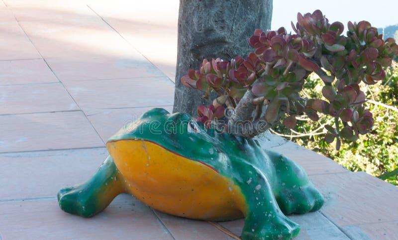 Belle petite grenouille d'arbre de conteneur étonnant et différent au restaurant Venezuela de Galipan photos stock