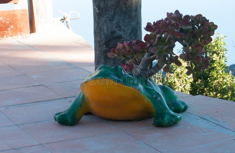 Belle petite grenouille d'arbre de conteneur étonnant et différent au restaurant Venezuela de Galipan image stock
