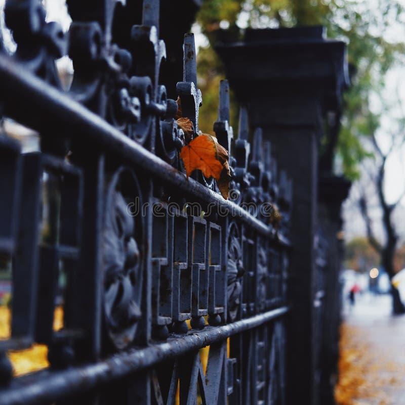 Belle photo d'automne photographie stock libre de droits