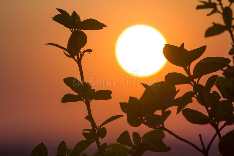 Belle photo de contraste des silhouettes claires des branches d'arbre photo libre de droits