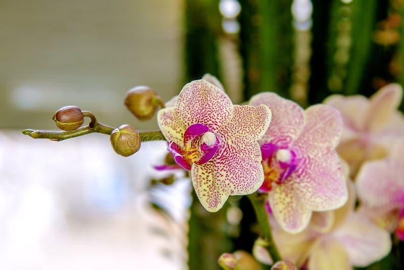Download Belle Pièce De Fleur Fleurissant L'orchidée Repérée Photo stock - Image du couleurs, rose: 87709200