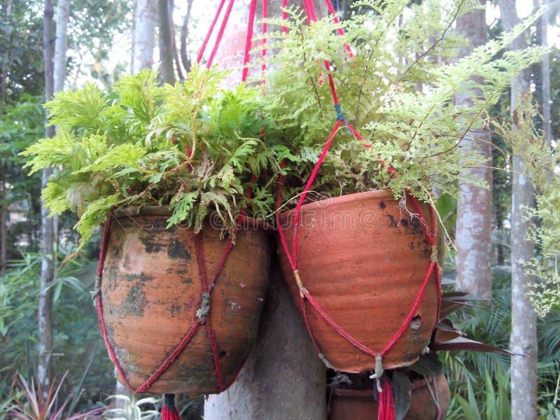 Belle piante immagine stock