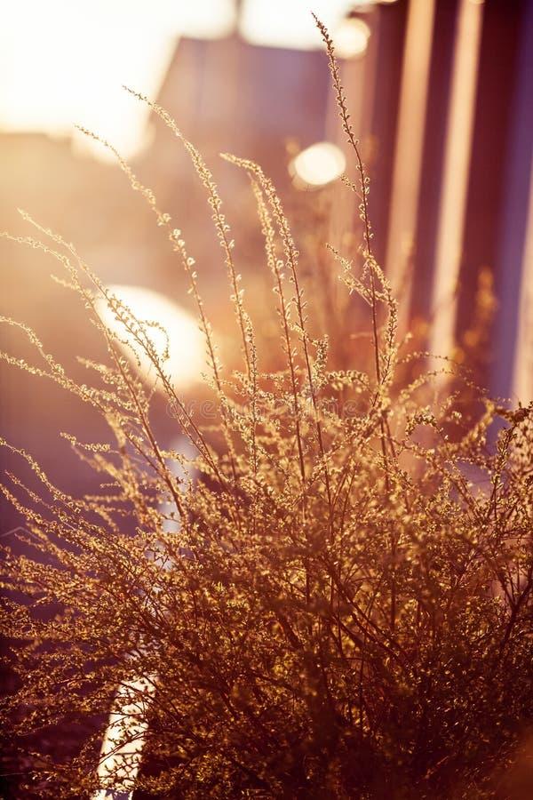 Belle piante Natura, molla fotografia stock