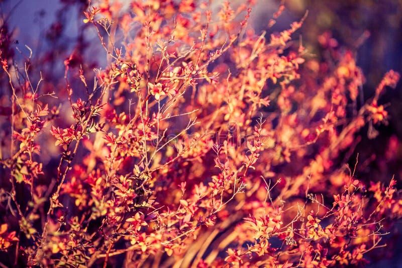 Belle piante Natura, molla immagine stock libera da diritti