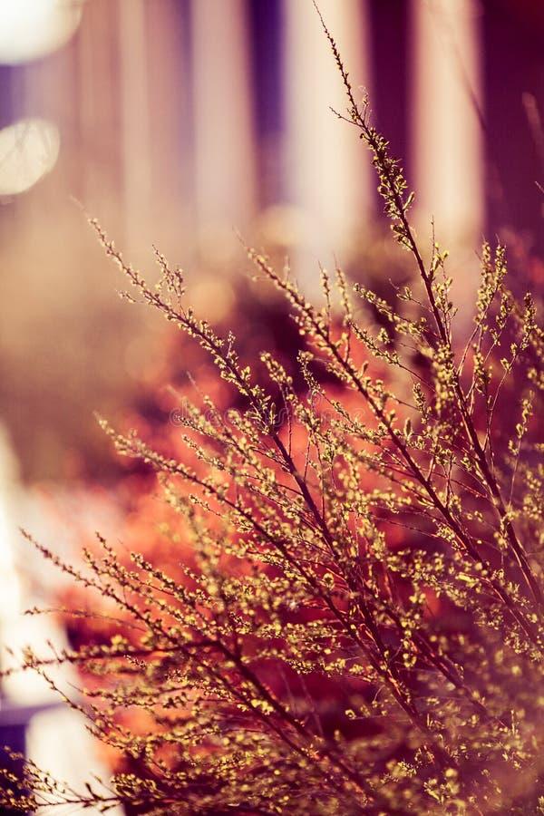 Belle piante Natura, molla fotografia stock libera da diritti