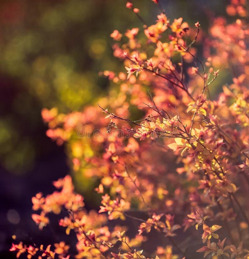 Belle piante Natura, molla immagini stock