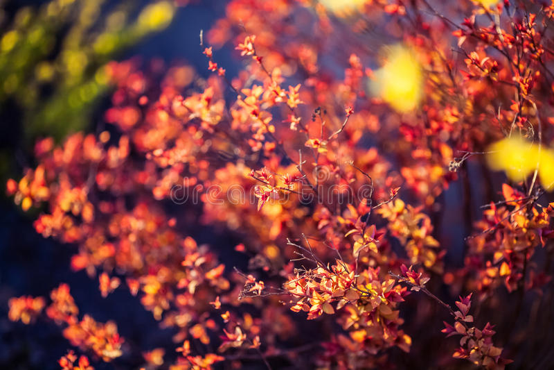 Belle piante Natura, molla immagini stock libere da diritti