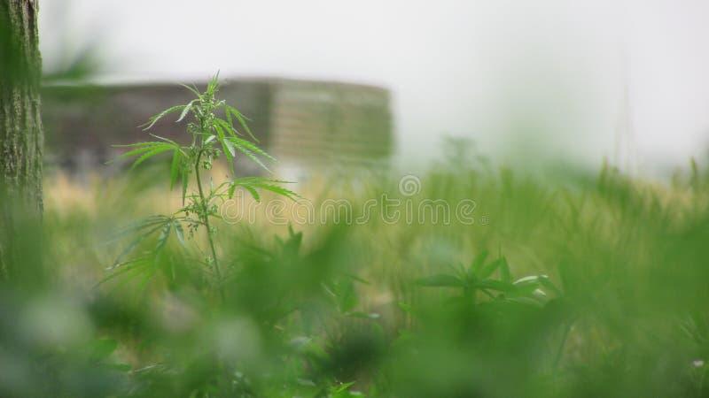 Belle piante verdi fotografia stock libera da diritti