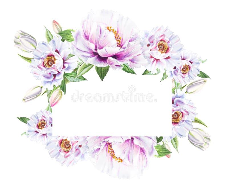 Belle pivoine blanche et cadre blanc de tulipes Bouquet des fleurs Impression florale Dessin de marqueur illustration libre de droits