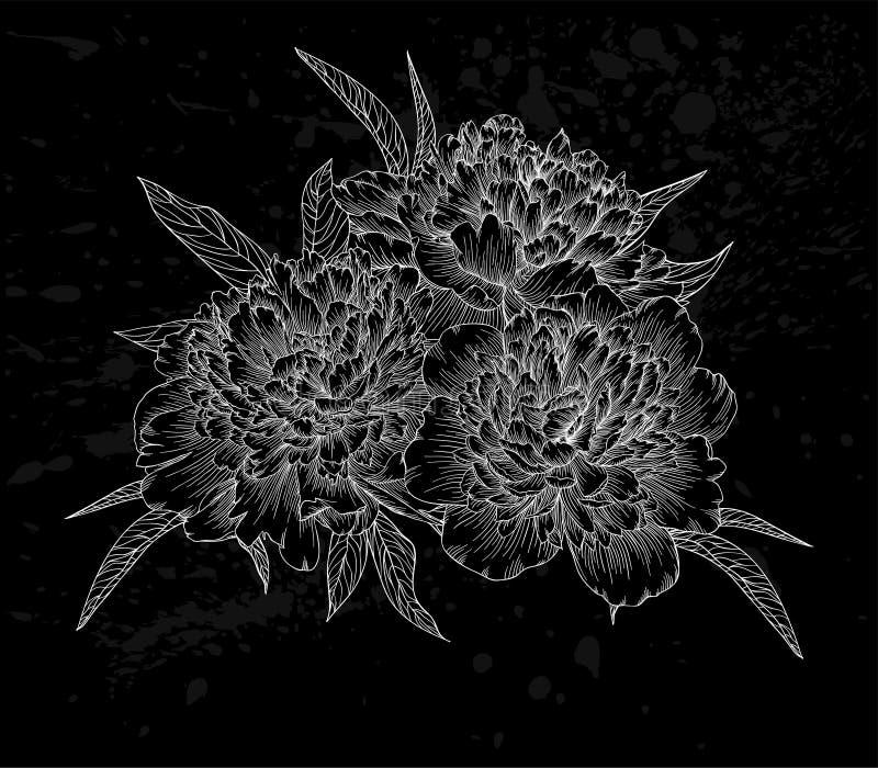 Belle pivoine noire et blanche monochrome de bouquet d'isolement sur le fond illustration libre de droits
