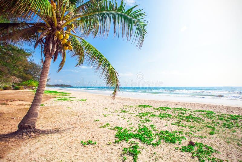 Belle plage avec le cocotier image libre de droits