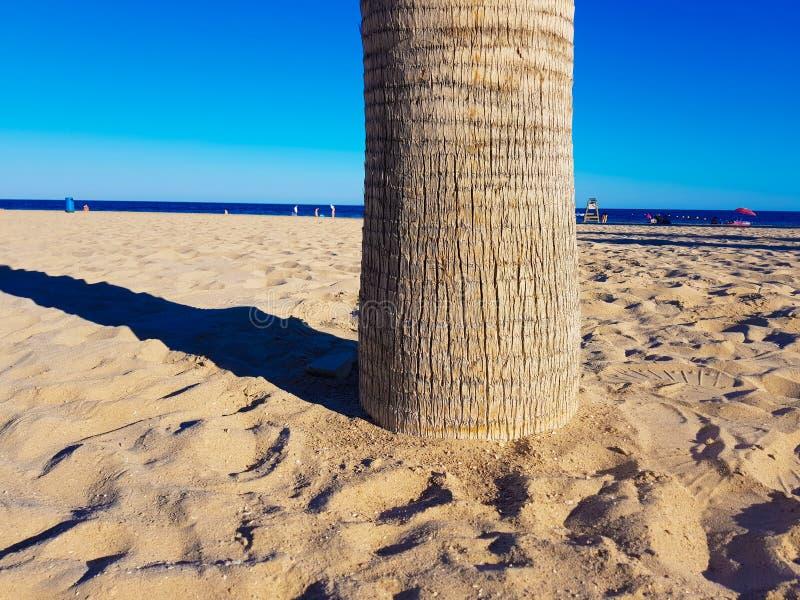 Belle plage ? Benidorm, Espagne Vue de la plage avec l'image ?troite des palmiers et de la mer avec des parapluies et des vacanci images libres de droits
