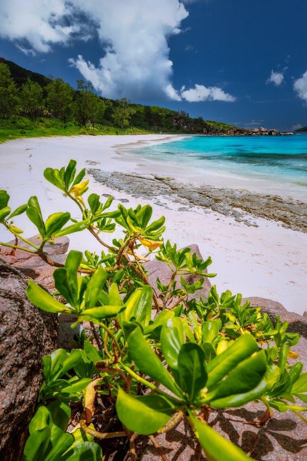 Belle plage blanche immaculée sauvage de paradis de sable chez les Seychelles, île tropicale de Digue de La image libre de droits