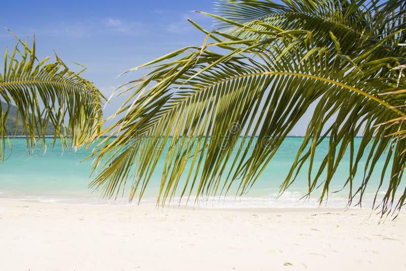 Belle plage de paradis avec les palmiers et le ciel bleu pour le voyage et les vacances dans les vacances détendre le temps image libre de droits